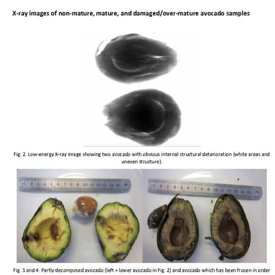 fruits inspections xray
