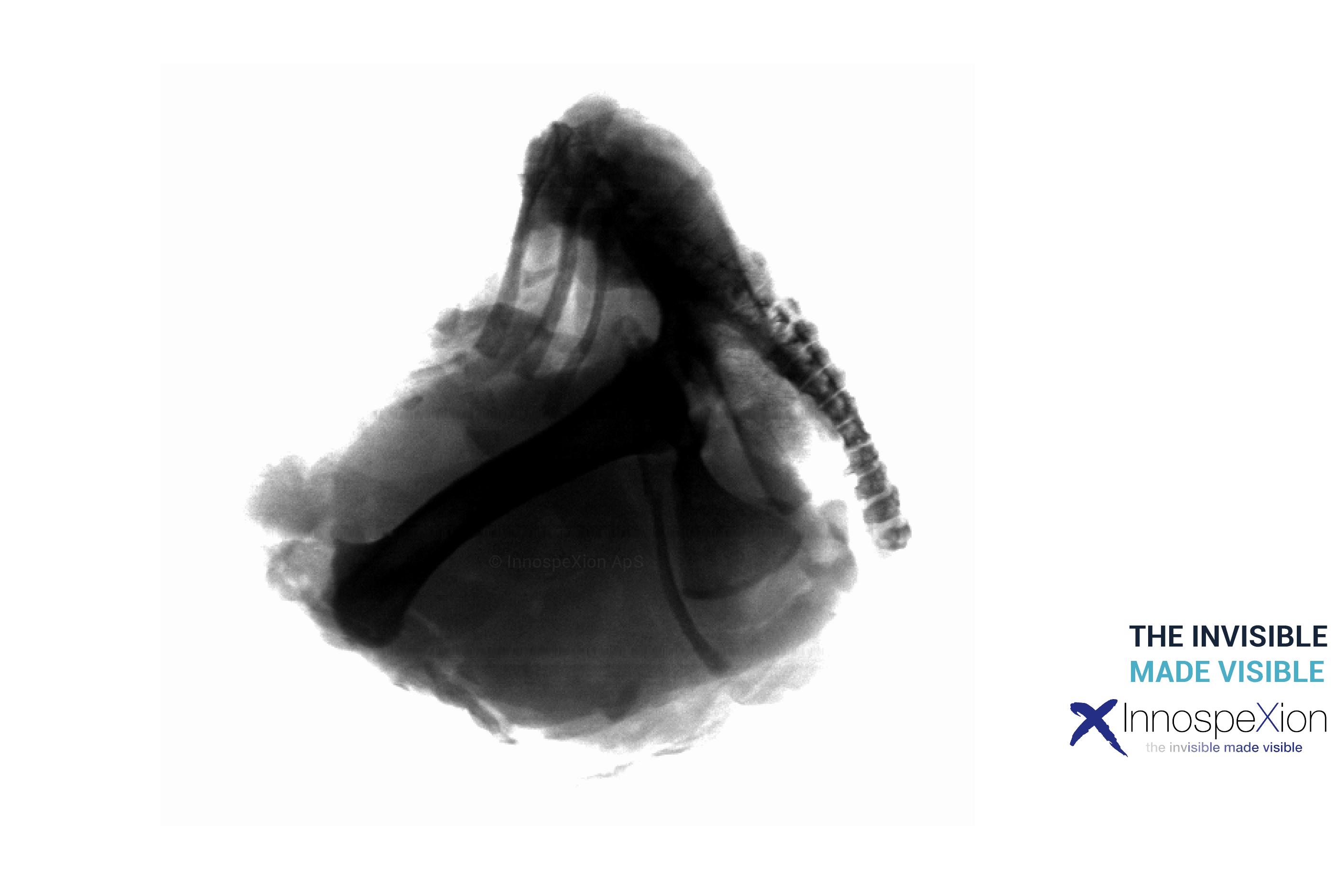 chicken bone detection xray
