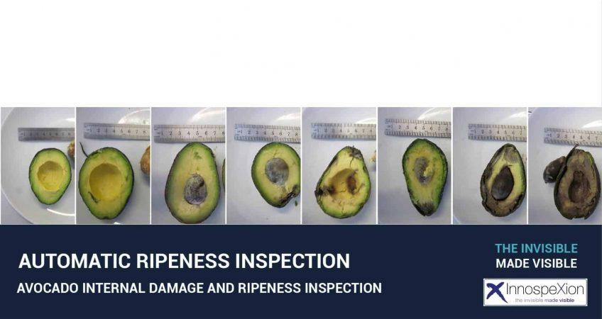 avocado ripeness inspection